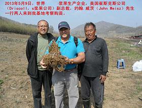 为美国Driscoll's浆果公司中国基地供苗