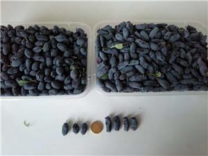 树莓种植实用管理技术